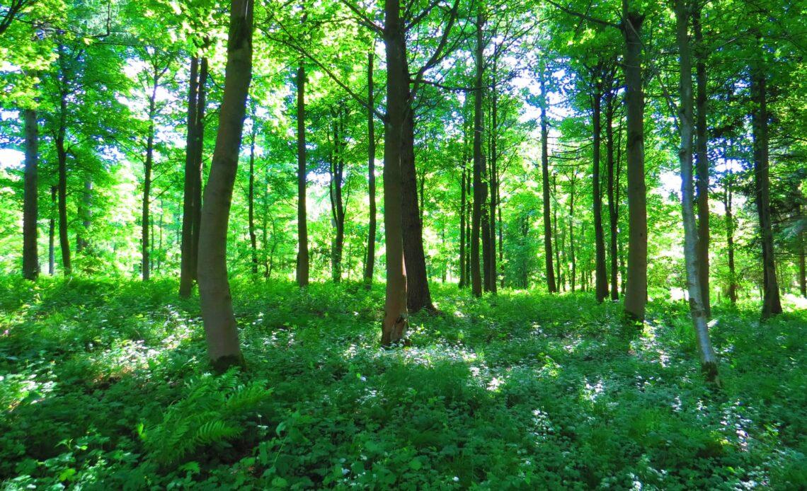#savethe environment #reducerecyclereuse